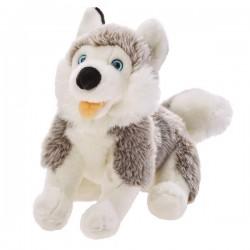 Pluszowy Pies Husky Beppe